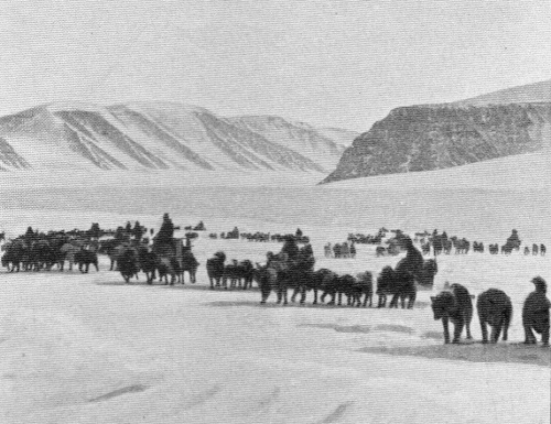 Ascent of the Inland ice in April 1912 as the First Thule Expedition starts from Clemens Markham's Glacier to Independence Fjord. All 4 explorers returned, but only 8 of the 54 dogs did.