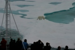 Polar bear on an ice floe in Kennedy Channel as seen from the bridge as the ship was approaching a station. [Photo Credit: Canadian Coast Guard Ship Henry Larsen]