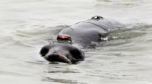 Seal with ocean sensor.